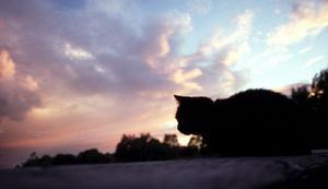 Minst 34 katter, varav vissa så unga som 3-4 månader, levde bland avföring, urin, avfall och tomma ölburkar. Foto: Hasse Holmberg