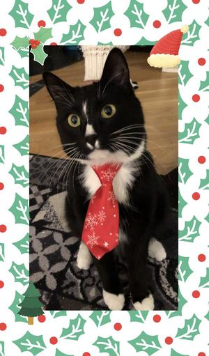 106) Lilleman är redo inför julen. Därav så invigdes nya slipsen, och den passade perfekt tyckte han! Foto: Klara Myrberg