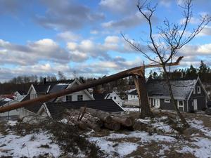 Stormen Alfrida var stark nog att knäcka även mycket grova träd, vilket gör röjningsarbetet mer komplicerat.