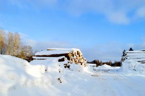 Cirka 600 granar har tagits ner i Säterdalens naturreservat. I väntan på transport ligger de nu bortanför Näsåkers koloniområde.