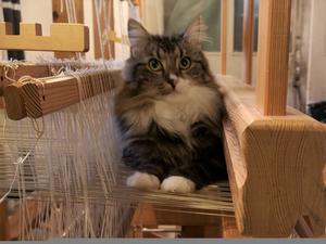 393) Maya Lurv är en socialt sällskapsdjur som gärna befinner sig mitt i händelsernas centrum. Foto: Marie Mustonen Ljung