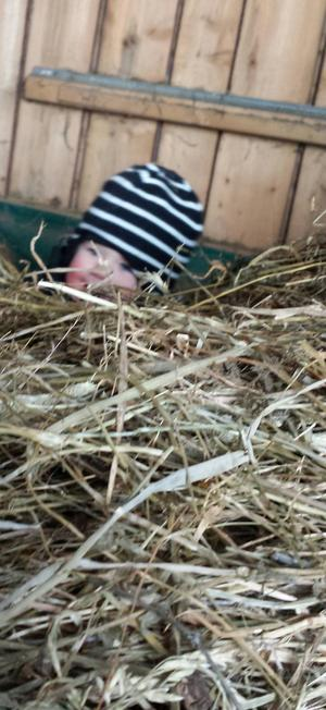 Bästa Bastian stalledräng hjälper till att packa hö på Ryssbo gård
