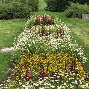 Kenneth har haft målsättningen att Mjösunds begravningsplats ska vara mer likt en park.