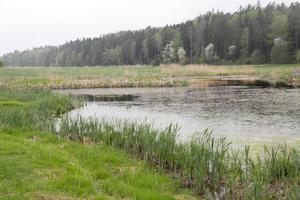 Vi har  gjort oss av med i princip alla våtmarker i södra Sverige för att öka odlingsarealen, skriver insändarskribenten.