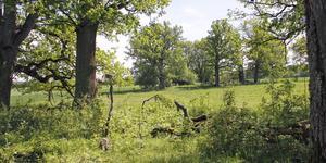 I Kungsörs kommun finns många vackra hagmarker, som här i Kungs Barkarö-trakten.