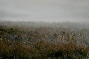 I Norrlands inland finns tusentals hektar av åkrar och ängar som ligger helt obrukade. Här finns stora möjligheter att plantera värdefull skog och göra miljömässigt sett enorma vinster, skriver Rolf Nilsson.