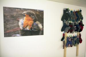 25 par stickade sockor som pendang till ett uttrycksfullt foto på en vacker fågel som pysslar med sitt. Ja, varför inte!