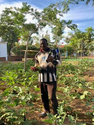 Parmoussa Sawadogos egen odling består av grödor som morot, tomat, aubergine, lök, potatis, purjolök och bönor. Foto: Yennenga Progress