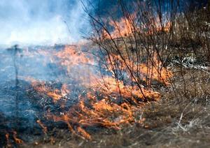 Stor gräsbrand. Det var en ganska stor gräsbrand som räddningstjänsten fick släcka i Tjärna sandtag igår eftermiddag.