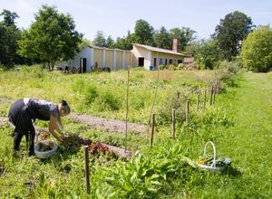 Det egna landen ska byggas ut, här ett område till vänster om Lola. Växthuset ser ni en del av i överkant på bilden. Här plockar hon egen sallad, kål och dill, till lunchgästerna.