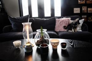 Familjens nytillskott Aili myser i soffan.