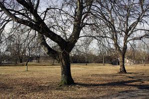 I den här parken  vid Skälängsgatan fanns det planer på att bygga bostäder.