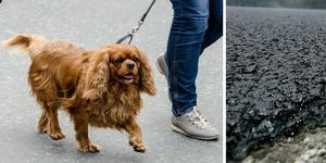 Hundägare och hundar varnas. Foto: TT