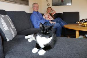 Darwin gillar att slappa i soffan.