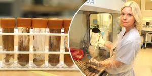 Molekylärbiologen Linda Lindh analyserar avföringsprover på Gävle sjukhus.