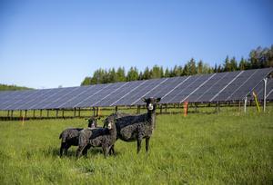 I Solhagen i Torphyttan gör Linde energi det möjligt för alla att satsa på lokalproducerad solel.