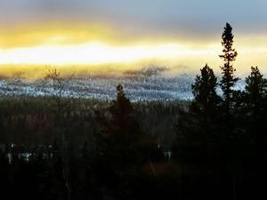 Artskyddsförordningen, nyckelbiotopsfrågan och problematiken gällande den fjällnära skogen är tre områden där politiken måste kliva fram och skapa trygga förutsättningar för enskilda skogsägare, skriver debattförfattarna. Foto: Lennart Öhd/Arkiv