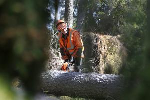 Göte Österman håller också olika kurser i skogsbruk, bland annat i motorsåg. – På bara ett år omkom elva personer som jobbade i skogen efter stormen Gudrun. Efter det blev det krav på motorsågskörkort, säger han.