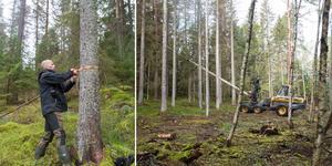 I slänten vid sidan av det som ska bli Mölnbos nya elljusspår har granbarkborren dödat en stor mängd granar. Skogsförvaltare Johan Persson upptäckte nyss angreppet, och skogen avverkas nu för att förhindra spridning.