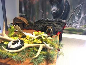 Vid ingången möttes besökarna av en liten jaktscen med horn och björnfäll. Björnen är skjuten av tävlingsledaren Sven-Åke Larsson, som också är jägare.