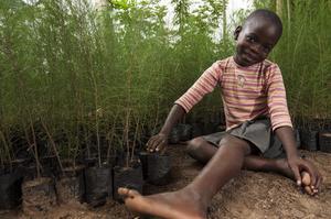 Mishell Achieng i Kenya hjälper sin farfar Maurice Odhiambo med planteringen av träd. Träden de planterar kan sedan hjälpa till att stå emot kraftiga skyfall, ge skugga mot den starka solen och rötterna binder kväve som tillför näring till jorden. Foto: Linda Andersson, Vi-skogen