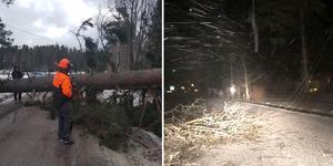 Stormen lämnade både nedfallna träd och nedblåsta ledningar efter sig. Foto: Anders Rundkvist/ Monica Holmström
