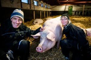 Veterinärparet Helena Vestin och Per Jonsson bott i Vänna sedan 1993. 1998 startade de hästklinik och för några år sedan drog de igång en ekologisk grisuppfödning.