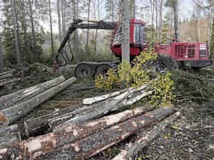 """Ökad äganderätt i skogen"""" innebär att de stora skogsbolagen får större möjlighet att skövla, menar Miljöpartiet."""