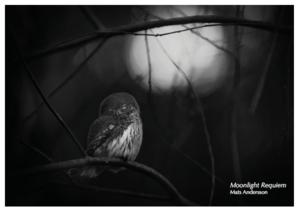 Fotografi från inbjudan till Mats Anderssons utställning på Naturfotografiska i Hallstahammar. Foto: Mats Andersson