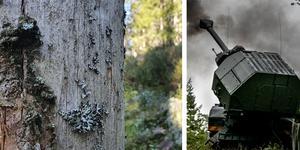 Bilden till vänster är ifrån Dunderklintarnas naturreservat vid gränsen till Villingsbergs skjutfält. FOTO: Privat