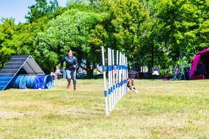 Sara Melander och bordercollien Zumo hade fart under agilityloppet.