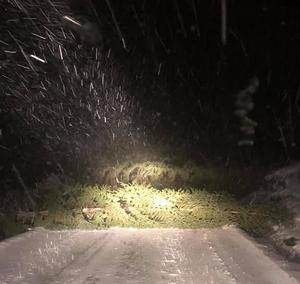 Träd som fallit över Uddeboövägen. Bilden togs vid 01.15-tiden på natten. Foto: Monica Holmström