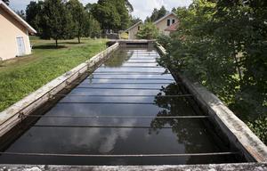 Den småskaliga vattenkraften behövs, skriver debattörerna. Bilden är från Brevens bruk i Närke. Foto: Malin Hoelstad/TT