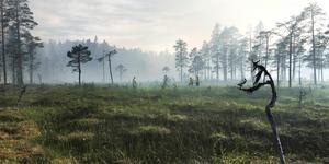 Helvetesbrännan. Västernorrlands kanske största naturreservat på sina 3 000 hektar – riktig vildmark i Ånge kommun.
