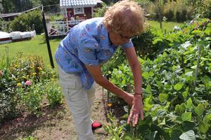 Lilian Persson visar tidningen hennes odlingar.