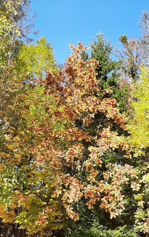 Hösten har många färger - till och med klarblått.