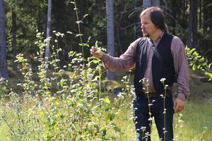 I skogsträdgården växer bland annat solros och bovete tillsammans. Båda är nyttoväxter som ger mat i höst och vinter.