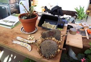 Frö- och plantkomplettering erbjuds under söndagens öppna hus.