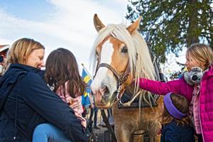 Många ville kela med den fina hästen.