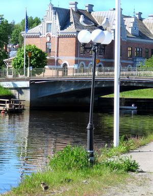 En liten måsunge på kajkanten vid Söderhamnsån under uppsikt av föräldrarna på lyktstolpen. Vad blir månne nästa steg?