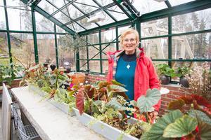 Det stora växthuset är den nyaste byggnaden på gården. Där odlar Cecilia Öster bland annat fikon och oliver, men växthuset används även som konferenslokal.