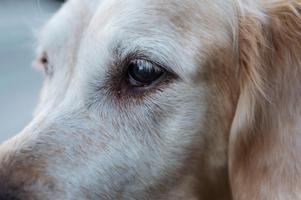 Politikern ska nu slåss för att få tillbaka den yngre hunden. Den äldre hunden är avlivad, en veterinär bedömde att den hade ålderskrämpor.  Bilden är taget i ett annat sammanhang.  Foto: Stina Stjernkvist/TT.