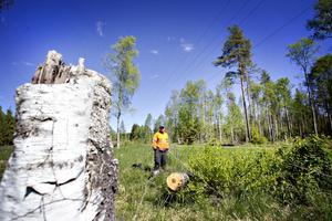 En björk kan ha ivarit en bidragande orsak till att Sandviken blev strömlöst under delar av torsdagen.