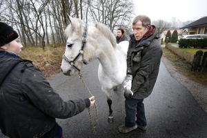 Alva och Jenny Hanssons häst Cocopops undersöks av Robert Winberg. Cocopops är inte drabbad av någon välfärdssjukdom.
