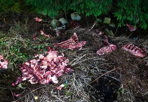 Kommunen kommer att meddela djurhållaren vad som gäller för hanteringen av slaktavfall. Bilden har inget direkt samband med det aktuella Gagnefsärendet.