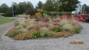 Ännu blommar det i rabatterna  i parken vid sjön Varpen
