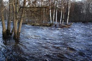 Under hela december och hösten har det för årstiden varit höga vattenflöden.