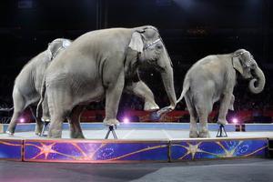 Elefanter i manegen. Foto: Bill Sikes/AP Photo