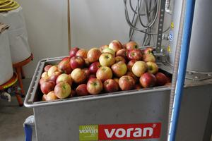 Äpplen som Katarina Holmberg pressar med