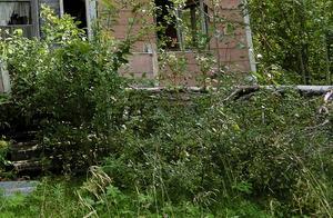 Arne Eriksson i Vikmanshyttan menar att det finns många fastigheter med stora mängder skräp och där gräset aldrig klipps. Han vill att kommunen inventerar dessa och kontaktar dessa fastighetsägare. Bilden är en arkivbild.  Foto: Lennart Öhd